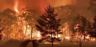 australia incendii de vegetatie 2019