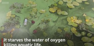 poluare marea neagra reportaj bbc