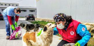 Vie Pfoten/Four Paws, stray dogs feeding, by Bogdan Dinca