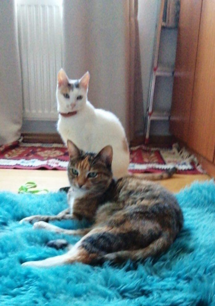 Pisici/cats, universul.net